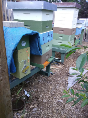 Boxes and boxes of bees